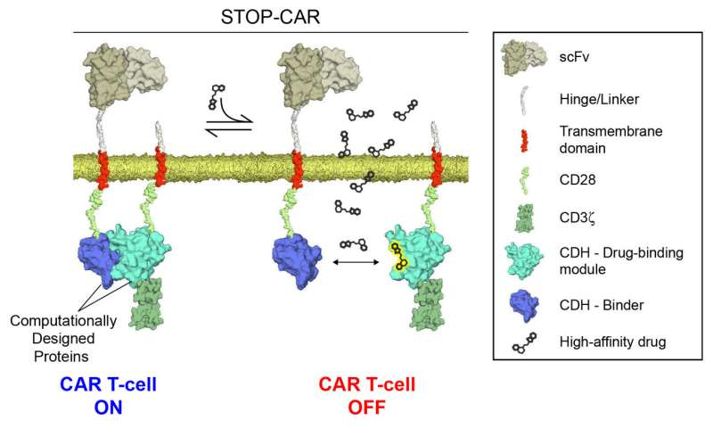Designing an emergency stop switch for immunotherapies