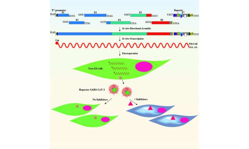 Development of new system for combatting COVID-19 that can be used for other viruses