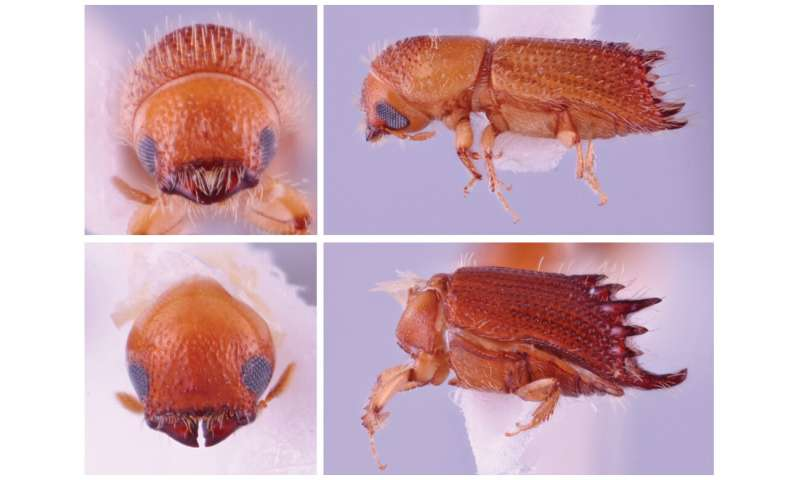 Discovering beetles abroad to protect trees at home