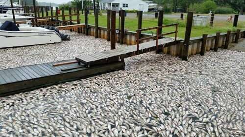 Dissolved oxygen and pH policy leave fisheries at risk