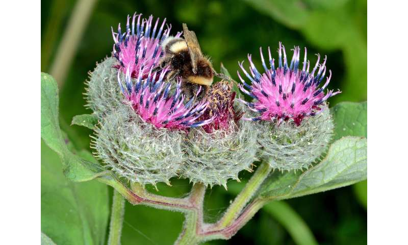 Dramatic loss of food plants for insects