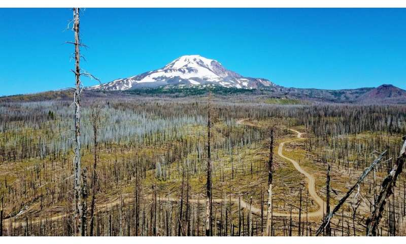 Driven by climate, more frequent, severe wildfires in Cascade Range reshape forests