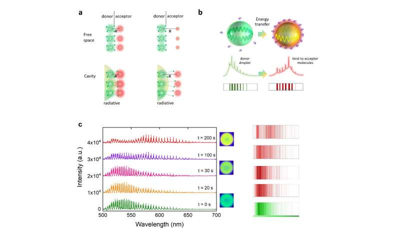 Dynamic photonic barcodes record energy transfer at the biointerface