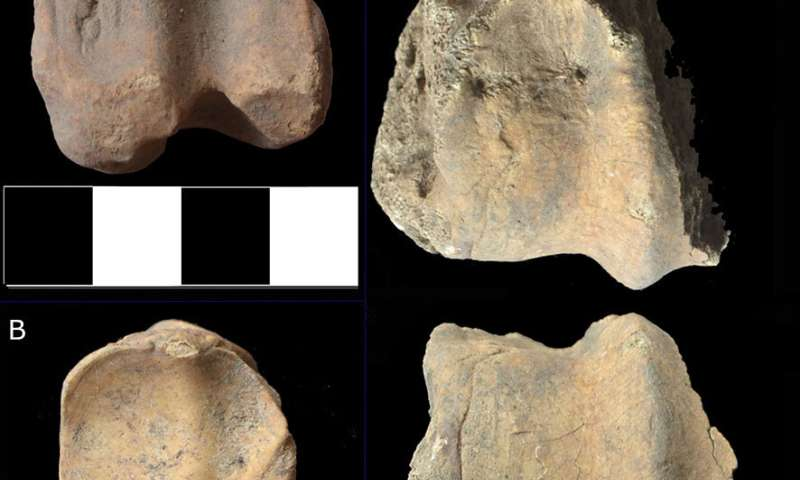 Early African Muslims had a halal -- and cosmopolitan diet -- discovery of thousands of ancient animal