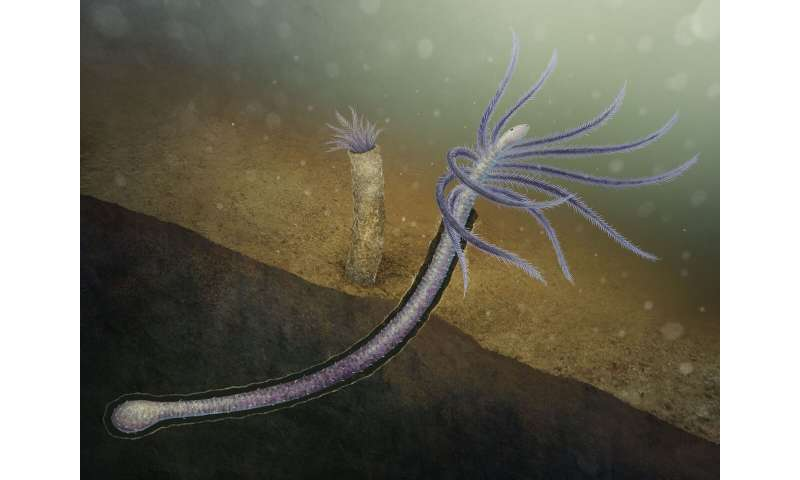 Early worm lost lower limbs for tube-dwelling lifestyle
