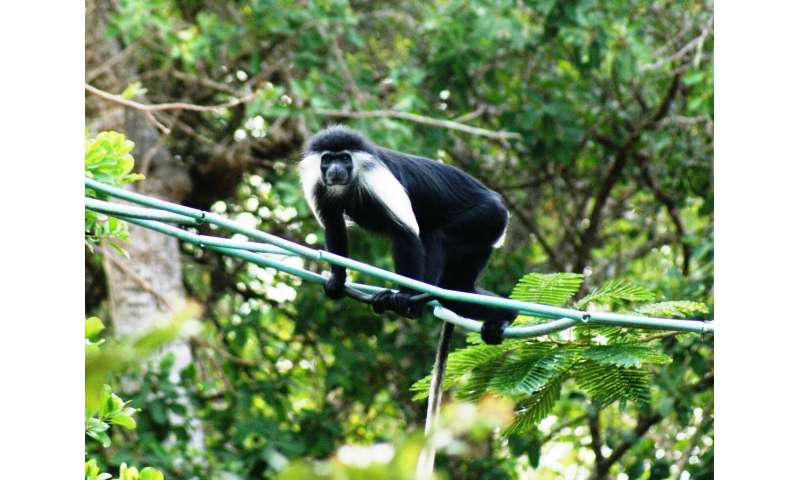 Effectiveness of primate conservation measures mostly unproved