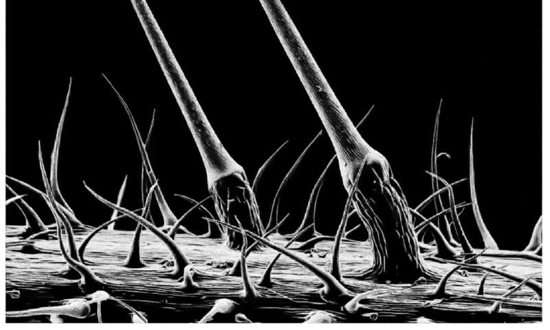 Elasticity key to plants and animals' ability to sting