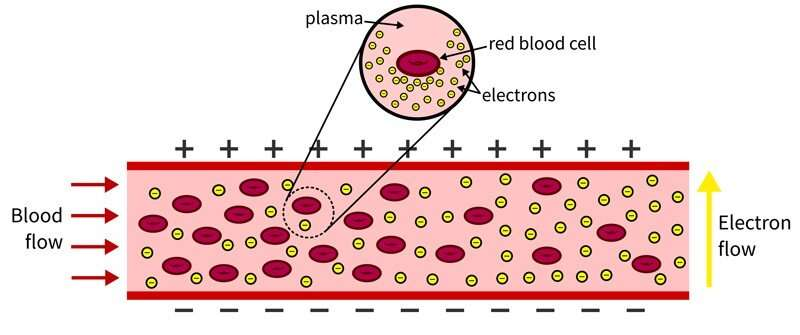 Engineer uses mechanical resistance to detect damage to red blood cells