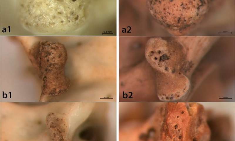 Evidence found of Natufian people eating snakes and lizards 15,000 years ago