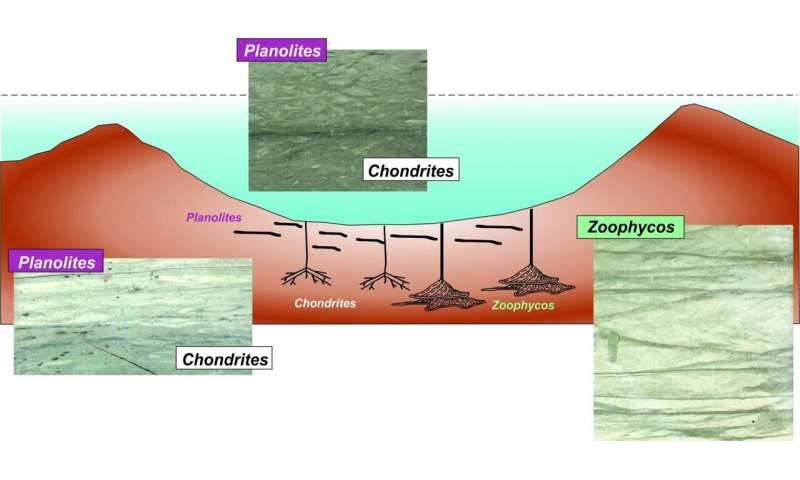 Evolution after Chicxulub asteroid impact: Rapid response of life to end-cretaceous mass
