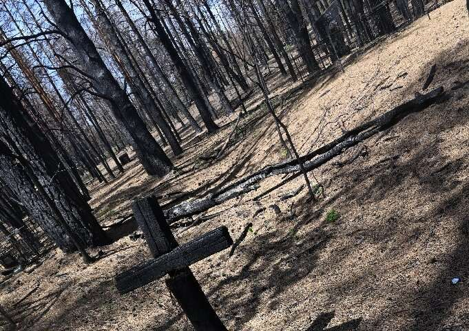 Experts say the fire, which came from outside the exclusion zone, was caused by an unusually dry winter and spring, which allowe