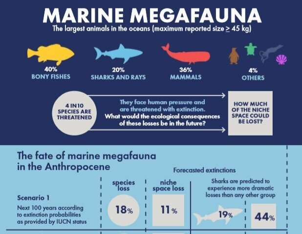 Extinction of threatened marine megafauna would lead to huge loss in functional diversity