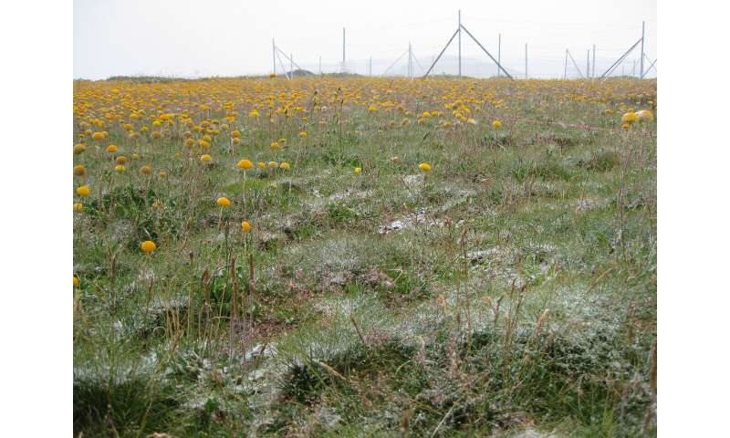 Fertilization threatens grassland stability