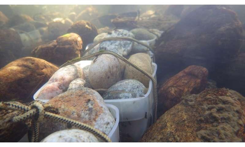 El fipronil, un insecticida común, altera las comunidades acuáticas en los EE. UU.