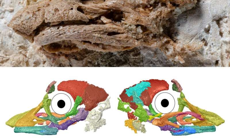 First 3D look at an embryonic sauropod dinosaur reveals unexpected facial features