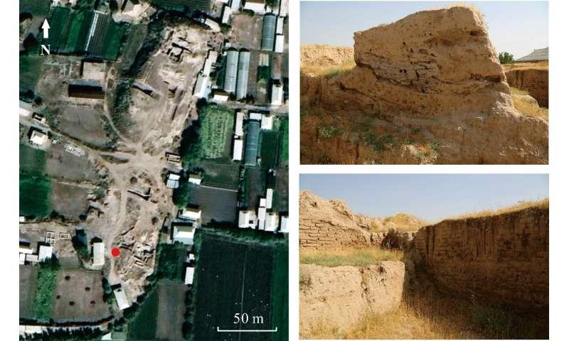 Primer arroz cultivado antiguo descubierto en Asia Central