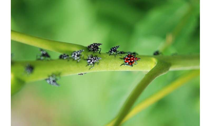 First hatches reported: Spotted lanternfly expert provides tips for management