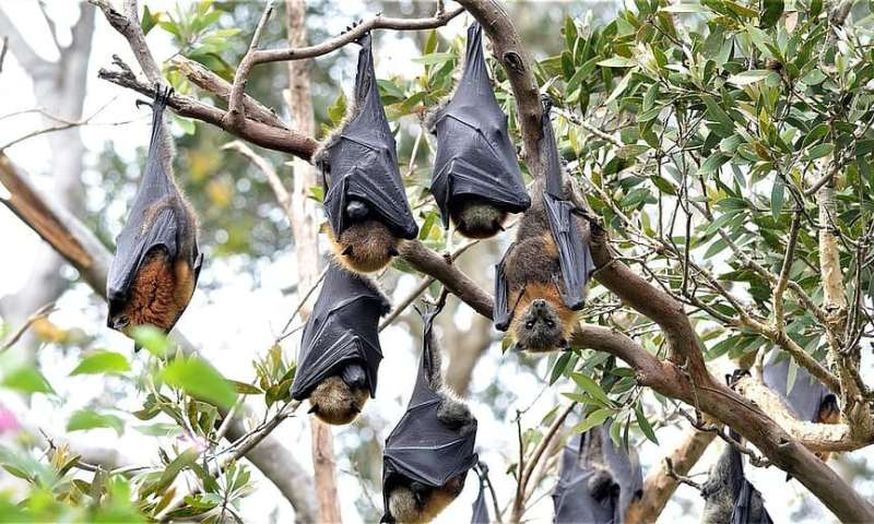 Five things you need to know about bats, disease and coronavirus