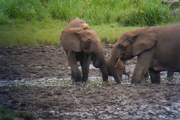 Following in the footsteps of elephants