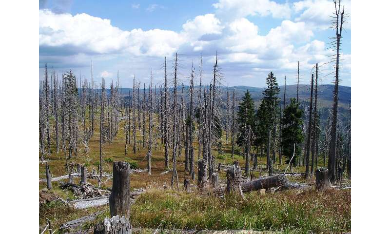 Forest darkness helps stave off effects of nitrogen pollution – but this is set to change