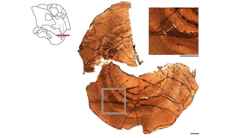 Evidencia fósil de un estado 'similar a la hibernación' en un animal antártico de 250 millones de años