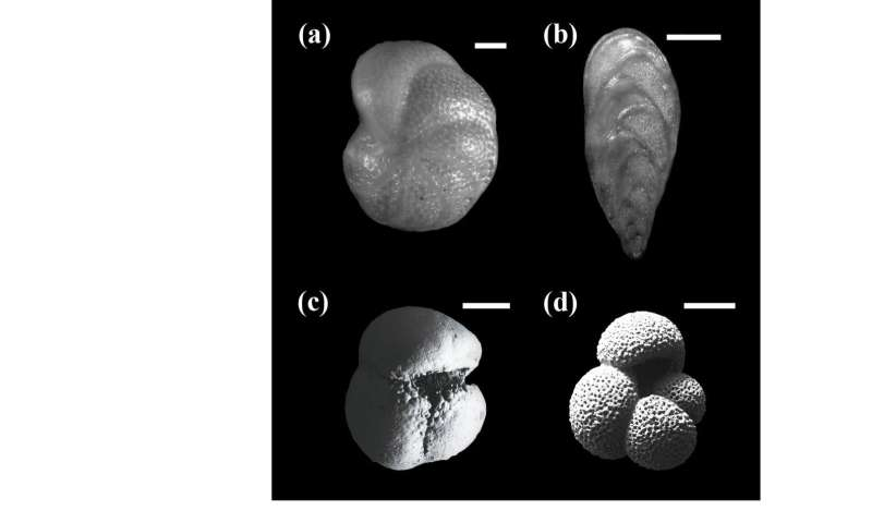Fossil foraminifer in marine sediment reveals sea surface water temperature 800,000 years ago