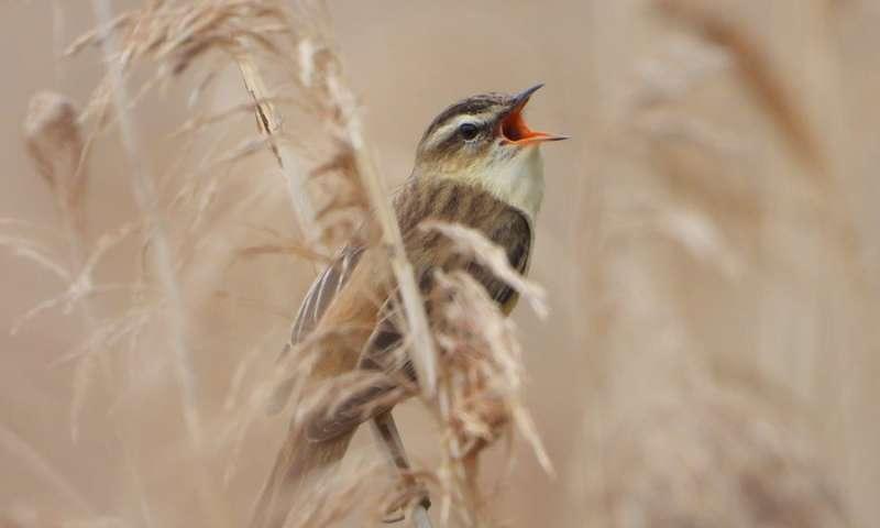 Estudio global sobre la frecuencia del canto de las aves