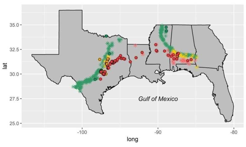 Moluscos da costa do Golfo ultrapassaram períodos passados de mudança climática