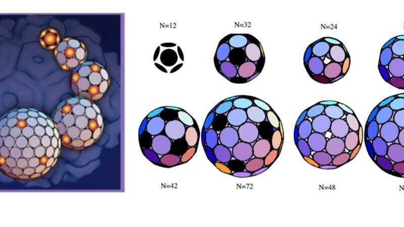How a virus forms its symmetric shells