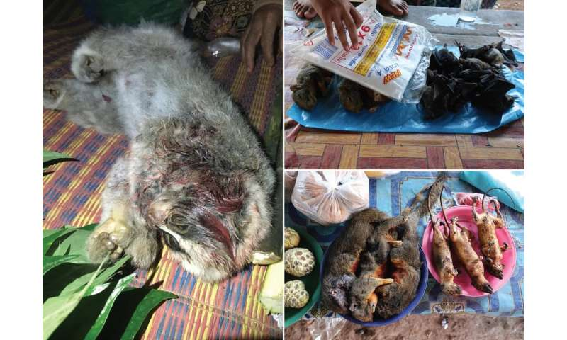 Illegal trade with terrestrial vertebrates in markets and households of Laos