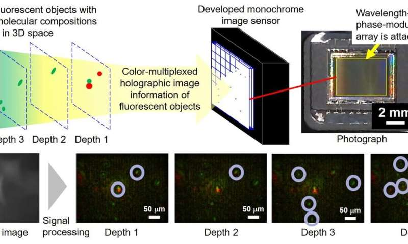 Instantaneous color holography system for sensing fluorescence and white light