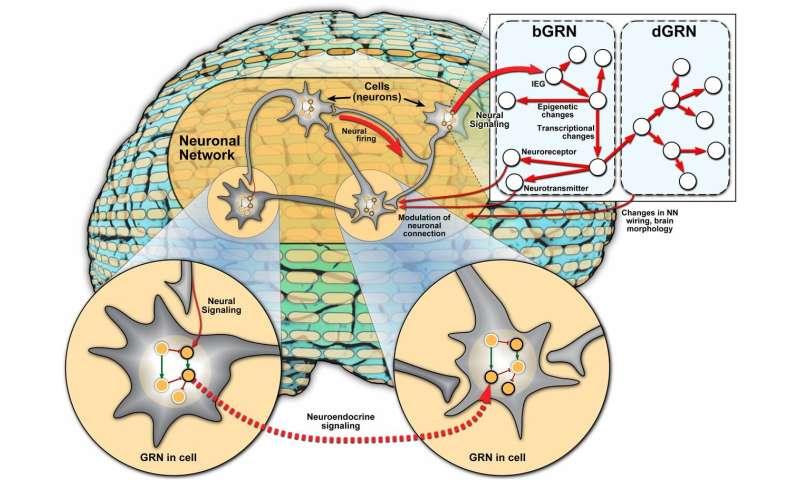 Integration of gene regulatory networks in understanding animal behavior