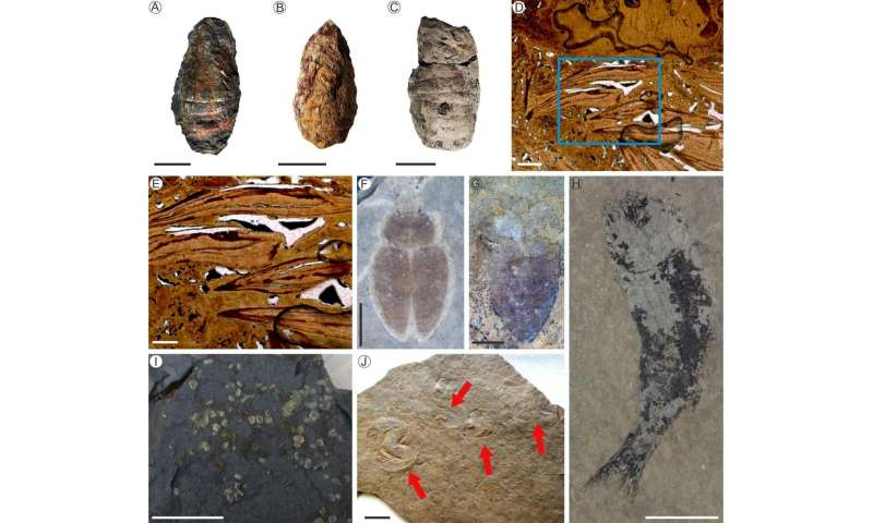 Lacustrine ecosystems needed 10 million years to recover after end-permian mass extinction