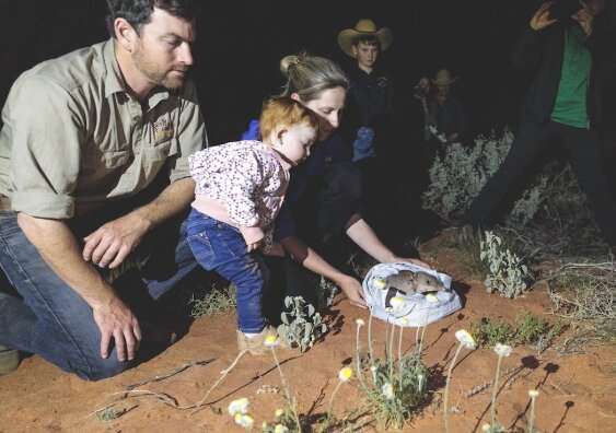 Landmark release sees bilbies return to Sturt National Park in NSW