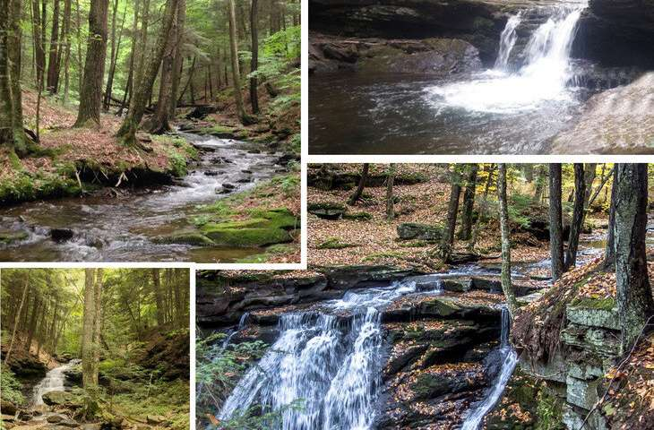 Larger streams are critical for wild brook trout conservation