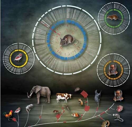 Looking at evolution's genealogy from home