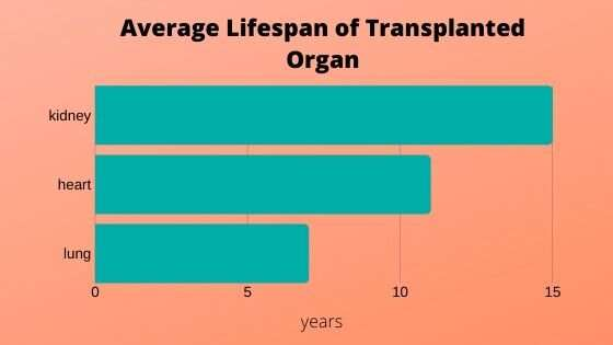 Looking for clues to improve the life of a transplanted organ