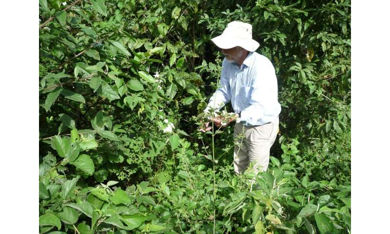 Major advances in our understanding of New World Morning Glories