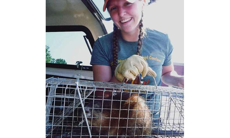 Many factors may contribute to steep, decades-long muskrat population drop