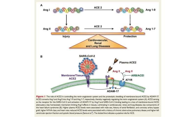 Il sangue degli uomini contiene maggiori concentrazioni di enzimi che aiutano COVID-19 a infettare le cellule