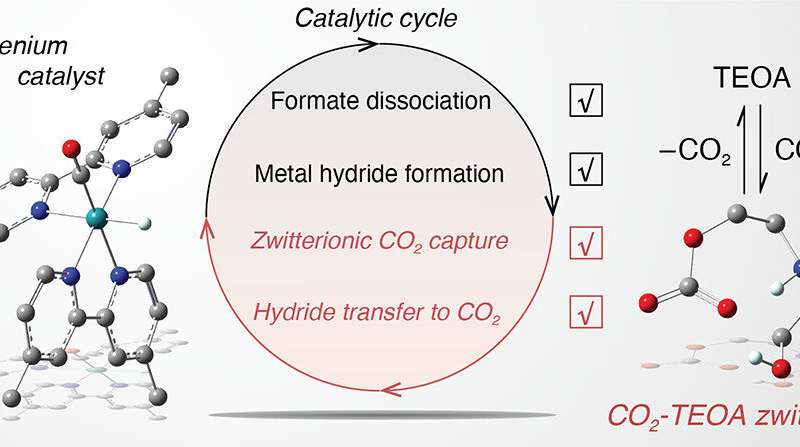 Monitoring intermediates in CO2 conversion to formate by metal catalyst