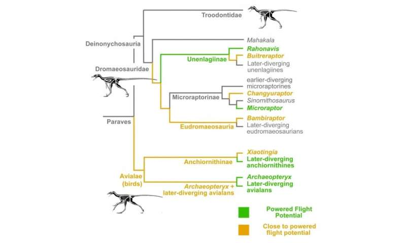 Most close relatives of birds neared the potential for powered flight but few crossed its thresholds