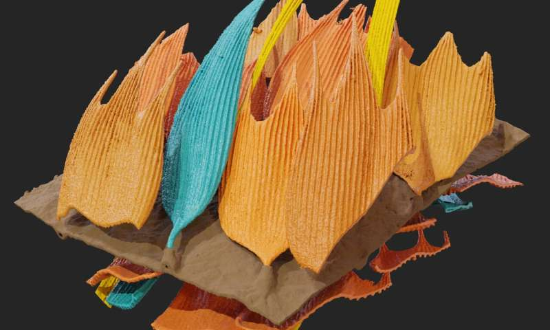Moths strike out in evolutionary arms race with sophisticated wing design