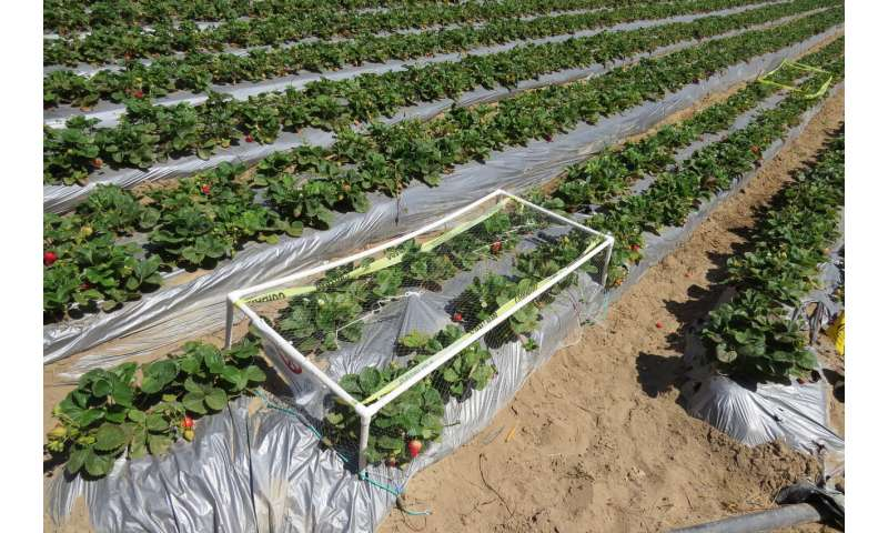 Natural habitat around farms a win for strawberry growers, birds and consumers