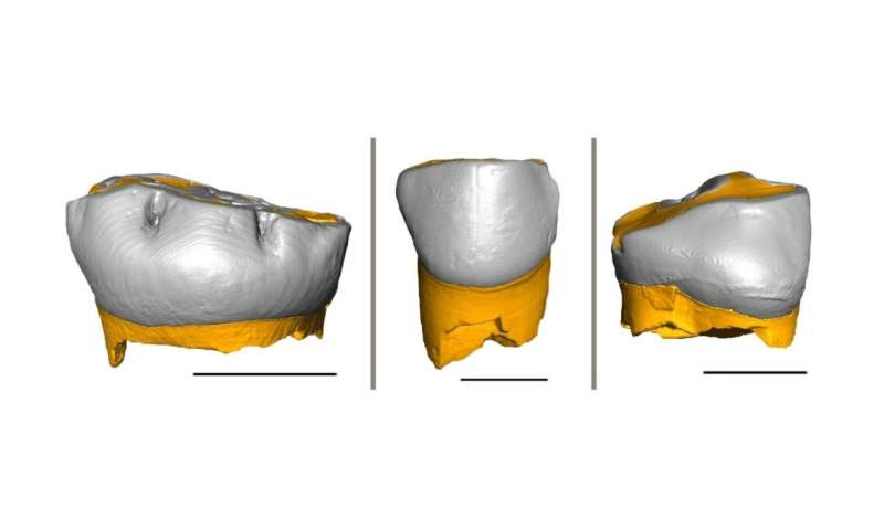 Neanderthal children grew and were weaned similar to us