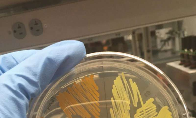 Never-before-seen bacterium found at Arnold Arboretum