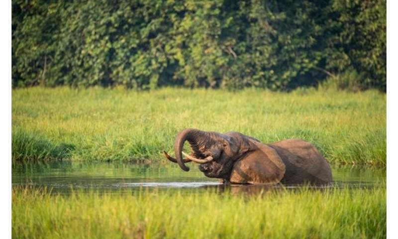 "New data analysis identifies the planet's best ""high value biodiversity"" habitat areas"