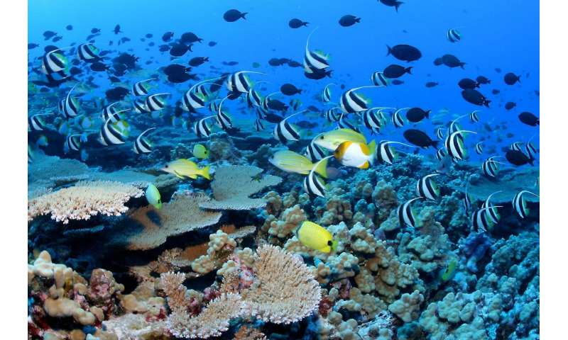 New findings: Pacific marine national monuments do not harm fishing industry