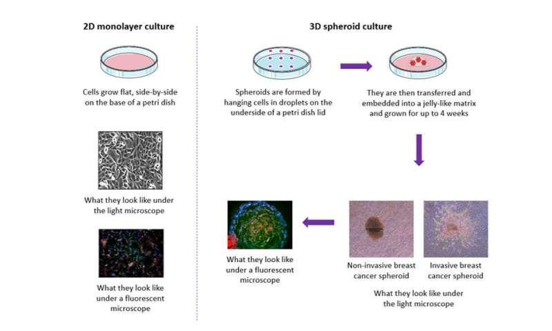 New insight into how stem cells interact with breast cancer cells