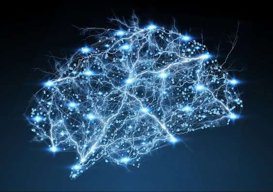 New light shed on neuronal circuits involved in behaviour, learning and dysfunction